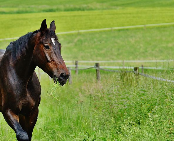 horse-1617857__480